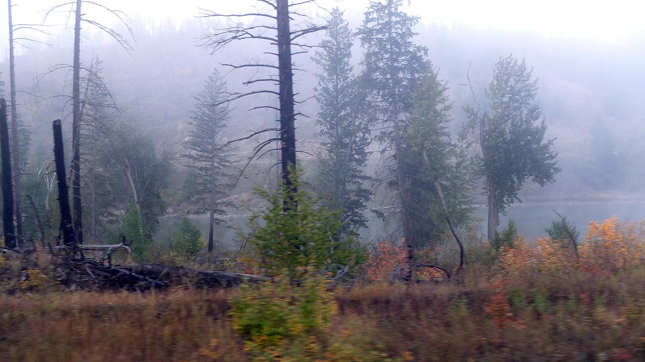 カナダの朝靄と針葉樹林