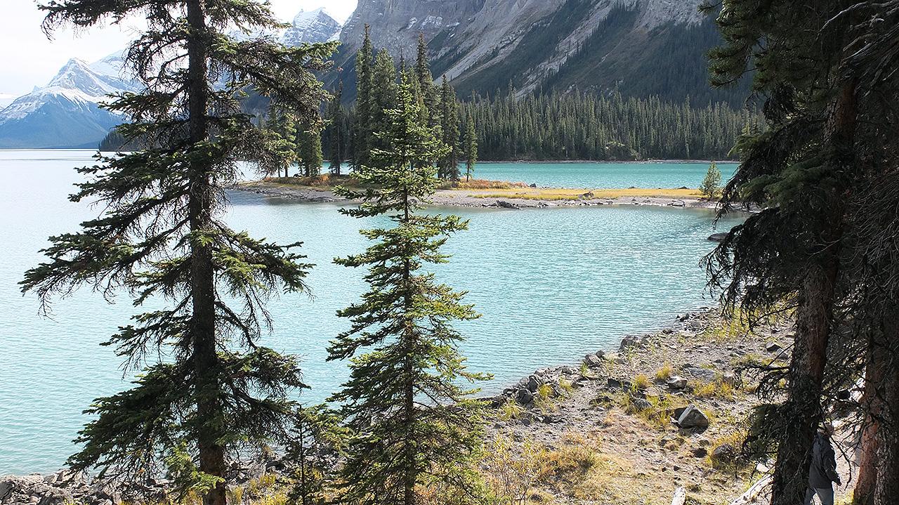 【カナダ~ジャスパー旅行記-4日目】Maligne Lake(マリーン・レイク)バス&クルーズツアーでスピリットアイランドへ