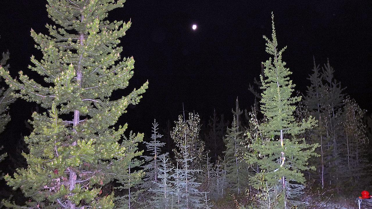 寝る前に撮影した針葉樹の森と月。カナダへ戻ってきて2日目で山奥でキャンプをすることになるとは・・・。
