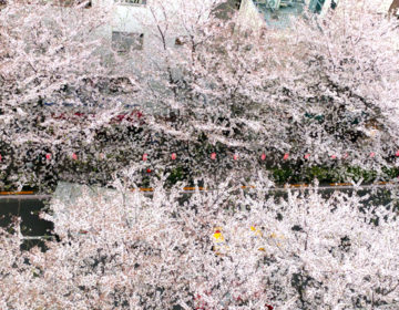 こちらは中野通りと早稲田通りの十字路辺りを上から。桜並木が中野通り沿いにずらーっと並んでいるので、歩くだけでも良い気分です。