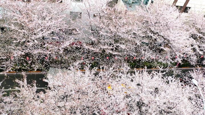 勝手に都内でオススメのお花見出来る公園まとめ