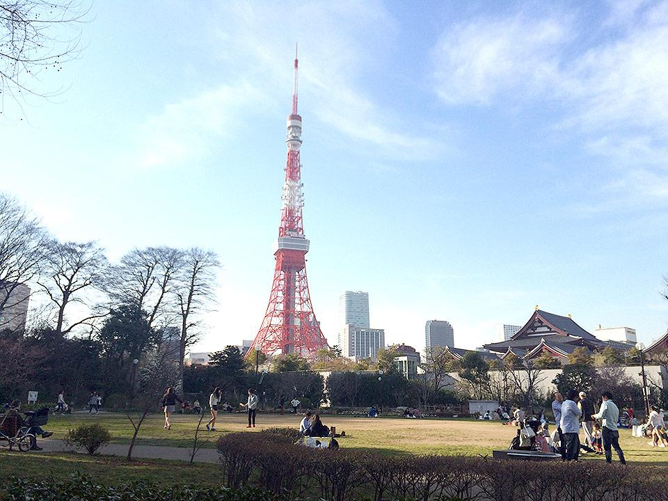 東京タワーが見える芝公園でお花見をしてきました
