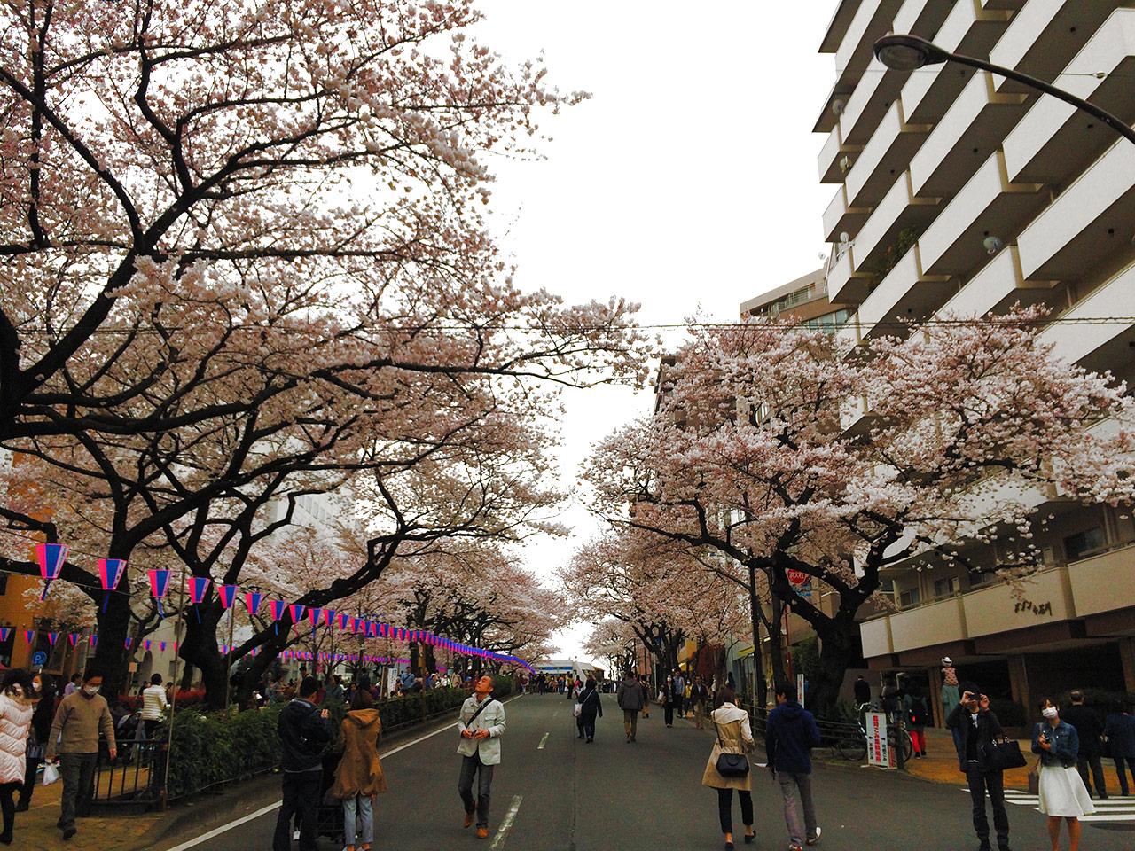 今回の桜祭りでは、道路を通行止めして歩行者天国のようにもなっていましたね。皆さん桜を撮影していました。