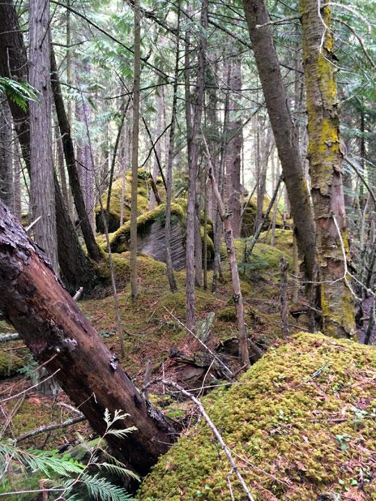 もののけ姫ちっくな光景。苔が生えている岩を見るとテンションあがります。