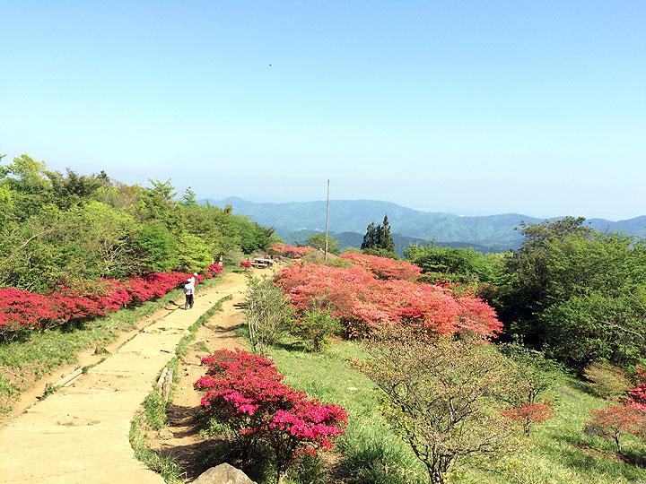 「つつじケ丘」までもう少し。つつじが鮮やかで綺麗でした。