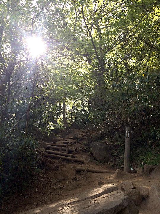 下山途中のルート。くだりなのでまだ楽でしたが、これを登っていくとなると初心には体力的にきつい(笑)